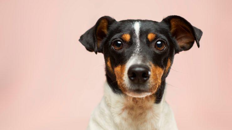 100 Best Unique Dog Names